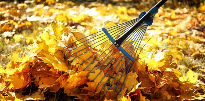 Outdoor Fall Clean-up Volunteer Event!